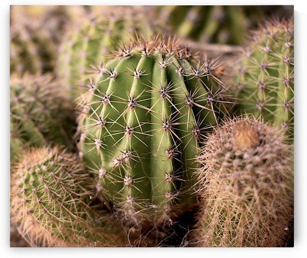 Cactus CY by Christiana Hepi