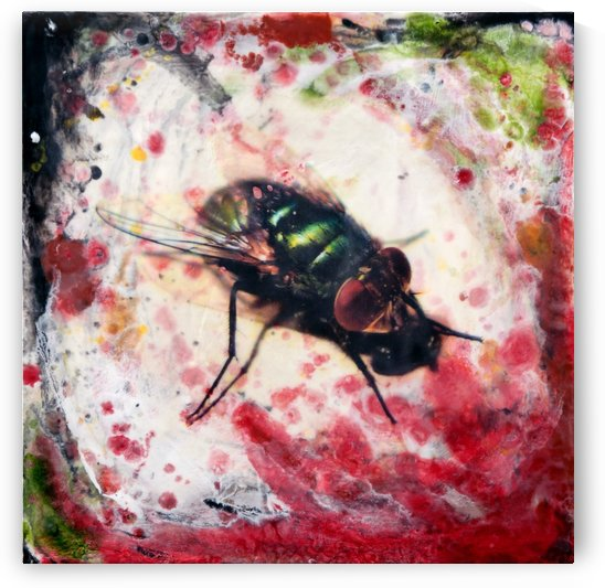Red-eyed fly by Nicole Fournier