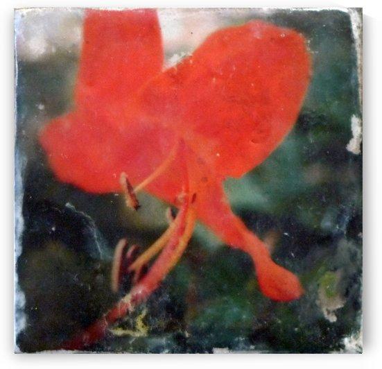 Tiger lily swirl by Nicole Fournier