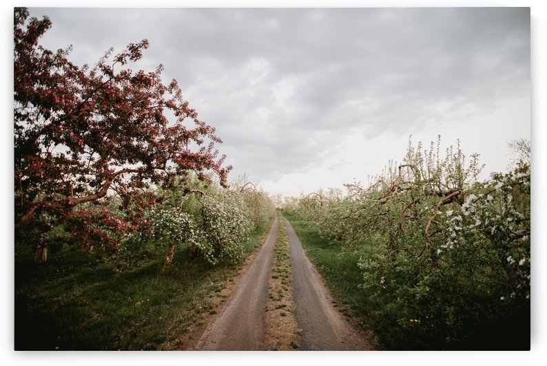 Chemin fleuri by StephanieAllard