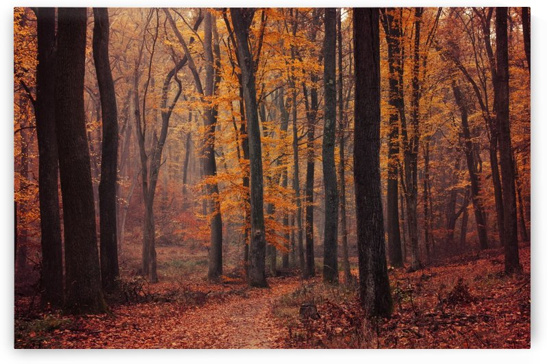 Fall Impressions VIII. by Zsolt Zsigmond