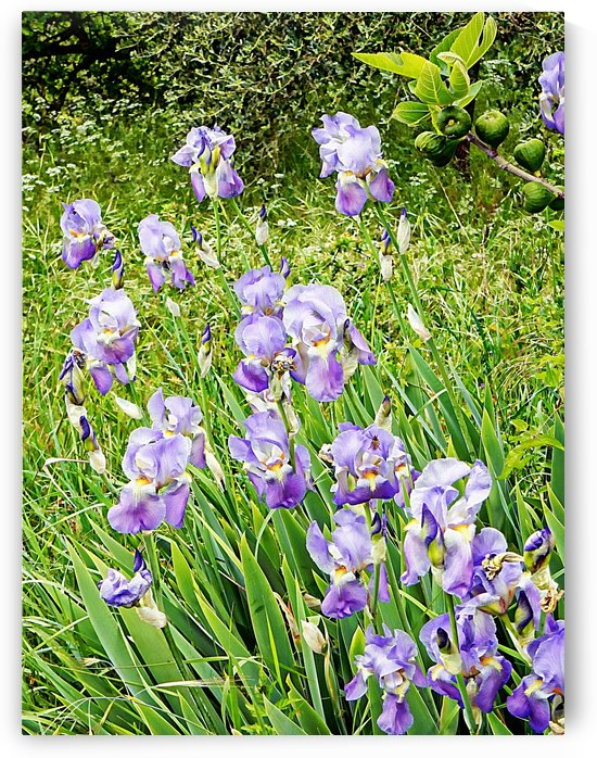 Iris With Fig by Dorothy Berry-Lound