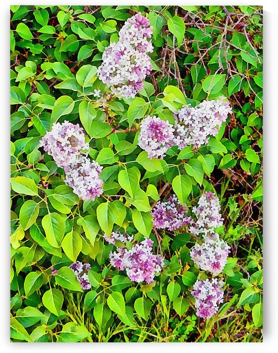Lilac Natural Patterns by Dorothy Berry-Lound