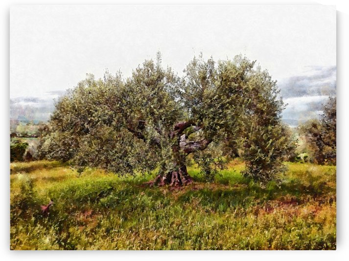 The Cat And The Olive Tree by Dorothy Berry-Lound