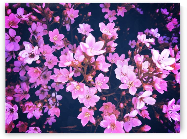 blooming pink flowers garden texture background by TimmyLA