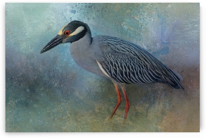 Night Heron Posing by HH Photography of Florida