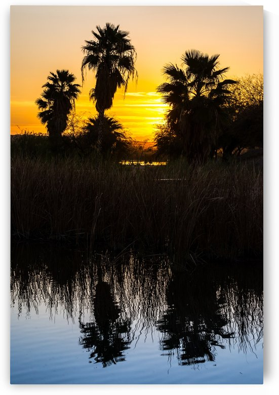 Squaw Lake Palms Sunrise - Yuma - Arizona by Gary Whitton