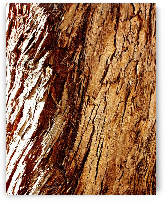 Pine Bark 1 by Shadow and Form