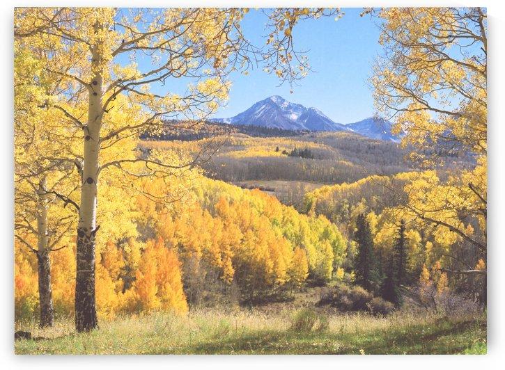 Sunshine Peak through the Aspen by Steve Tohari