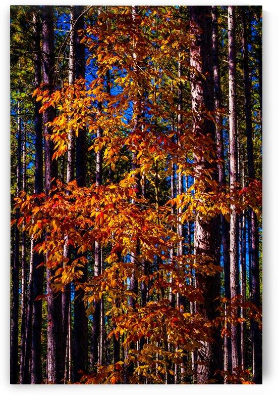 Autumn Fire by MumbleFoot