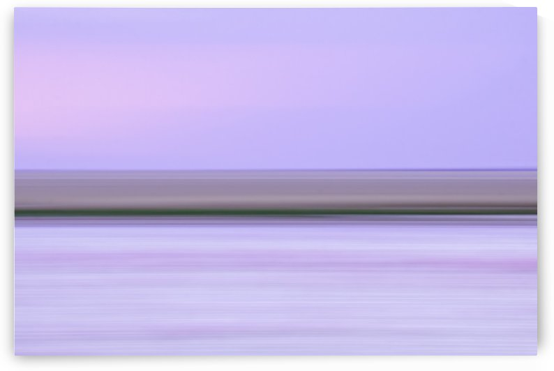 Flamingos [purple] by Peter Jacoby