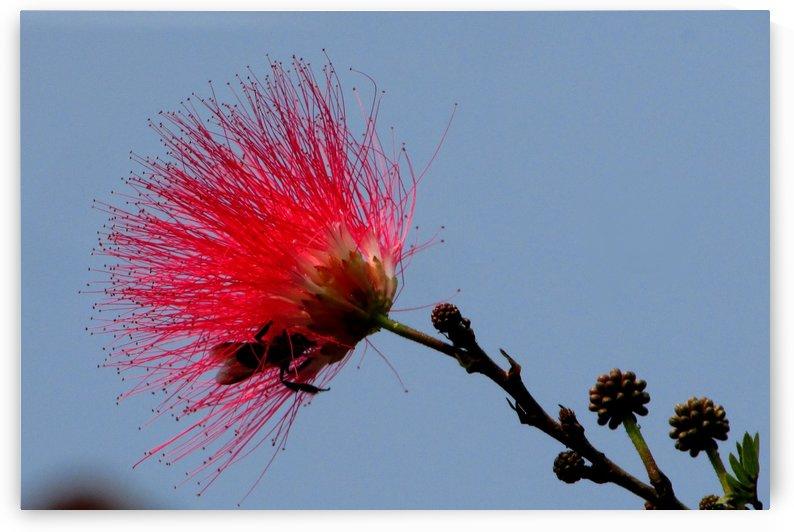 FLOWER ON SKY by MUKTINAVA CHOWDHURY
