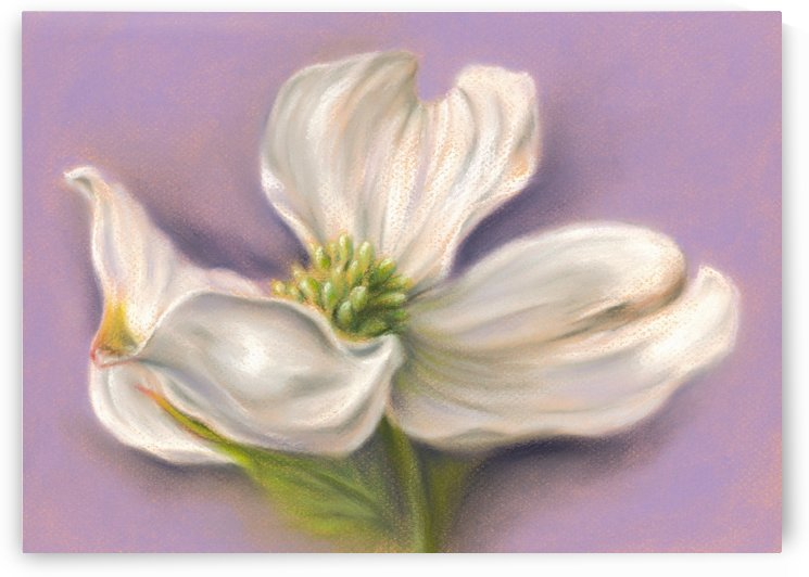 White Dogwood on Purple by MM Anderson
