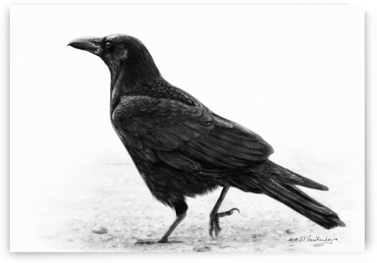 Crow by Danguole Serstinskaja