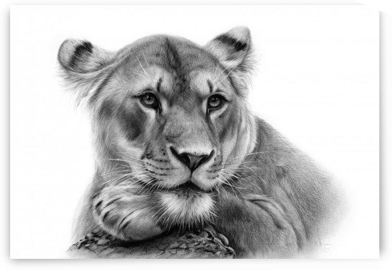 Lioness by Danguole Serstinskaja