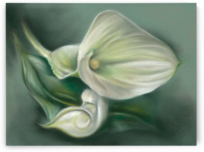 White Callas and Leaf by MM Anderson