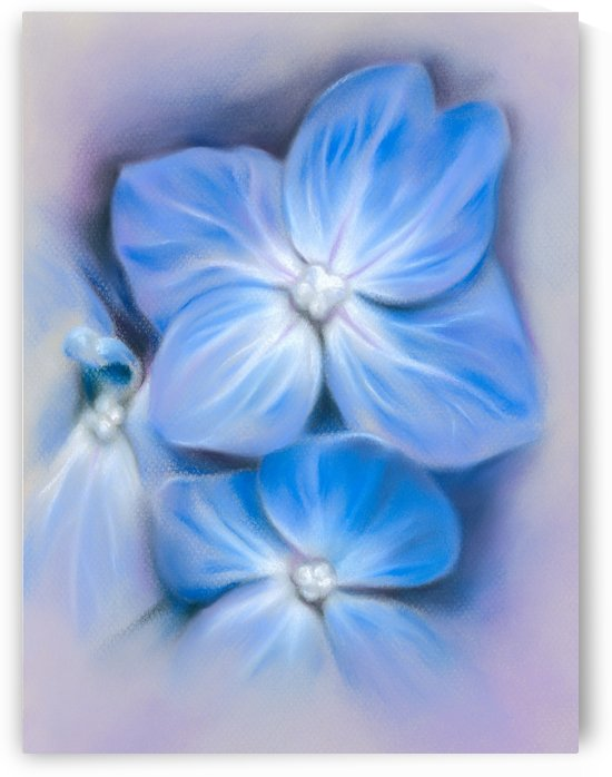 Blue Hydrangea Blossoms by MM Anderson