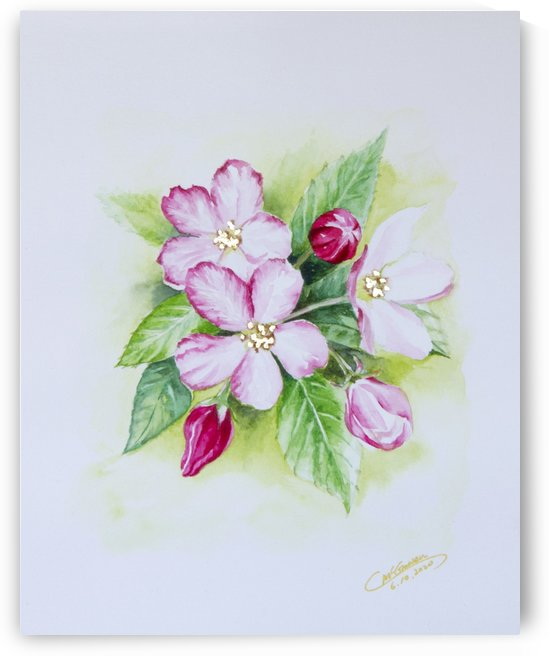 Apple Blossom by C  McGowen