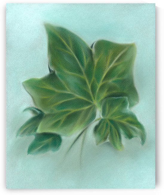 Three Green Ivy Leaves by MM Anderson