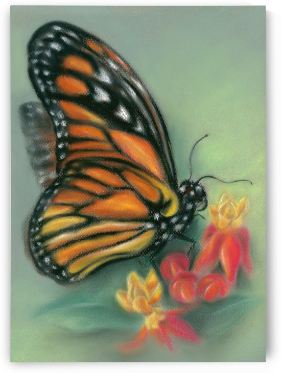Monarch Butterfly with Milkweed Flowers by MM Anderson