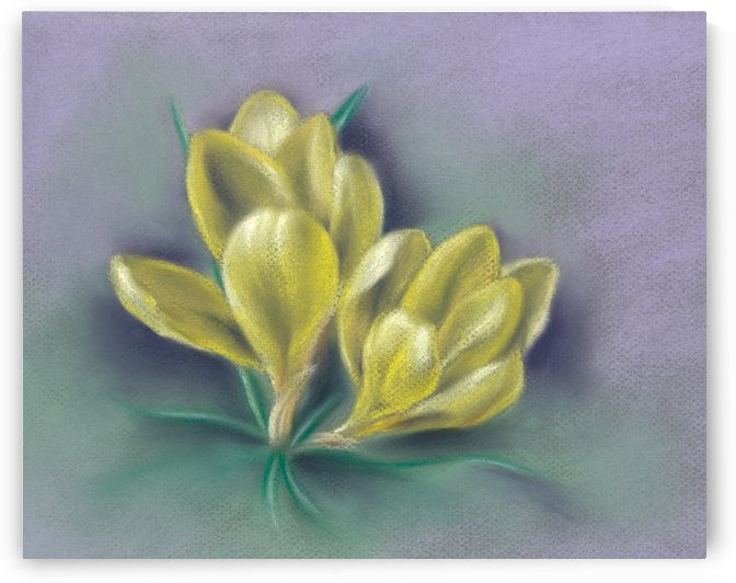 Cheery Yellow Springtime Crocuses by MM Anderson
