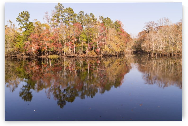 Waccamaw River in November by MM Anderson