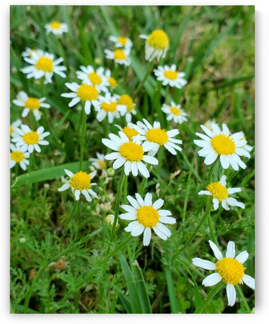 The Earth is Pushing up Daisies  by The NC Geek