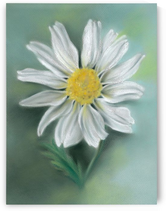 White Daisy Flower with a Yellow Eye by MM Anderson