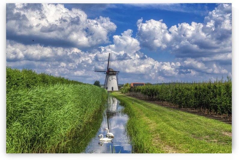 Windmill by Petre Miuta