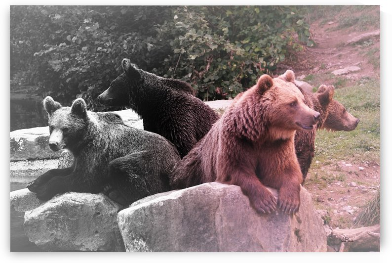 four brown bears hanging out on some rocks by dePace-
