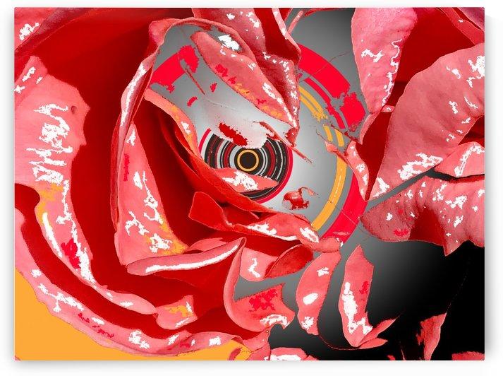 Rose Returns Stare by BotanicalArt ca