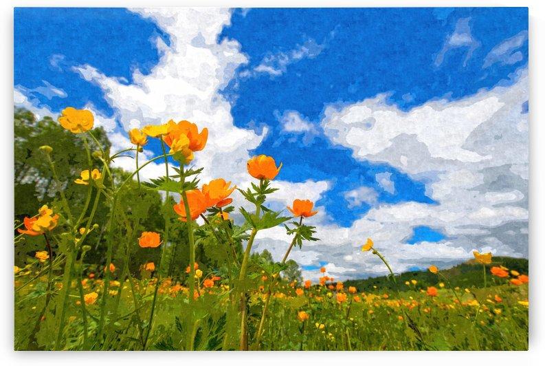 California Poppies Under Blue Skies by Alpenglow Workshop