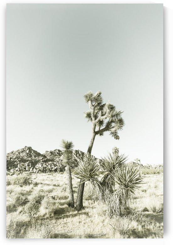 Joshua Trees | Vintage  by Melanie Viola