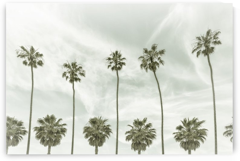 Vintage Palm Trees  by Melanie Viola