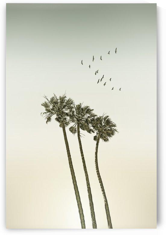 Vintage palm trees at sunset by Melanie Viola