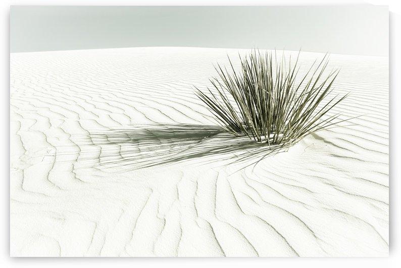 WHITE SANDS Idyllic scenery | Vintage by Melanie Viola