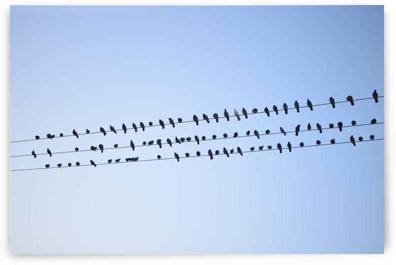 Birds Assembly by Bayaaz