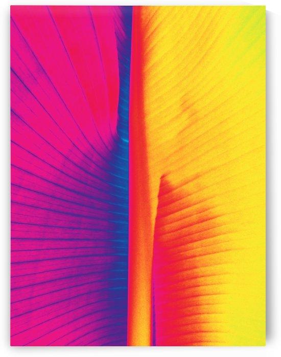 FOLHAS VERDES   80X106   09 05 2020    05A3 by Uillian Rius