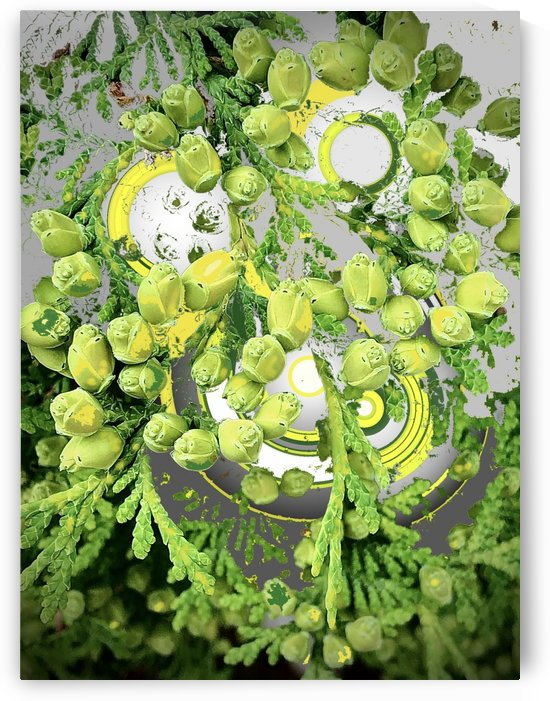 Conifer Arrangement with Yellow by BotanicalArt ca