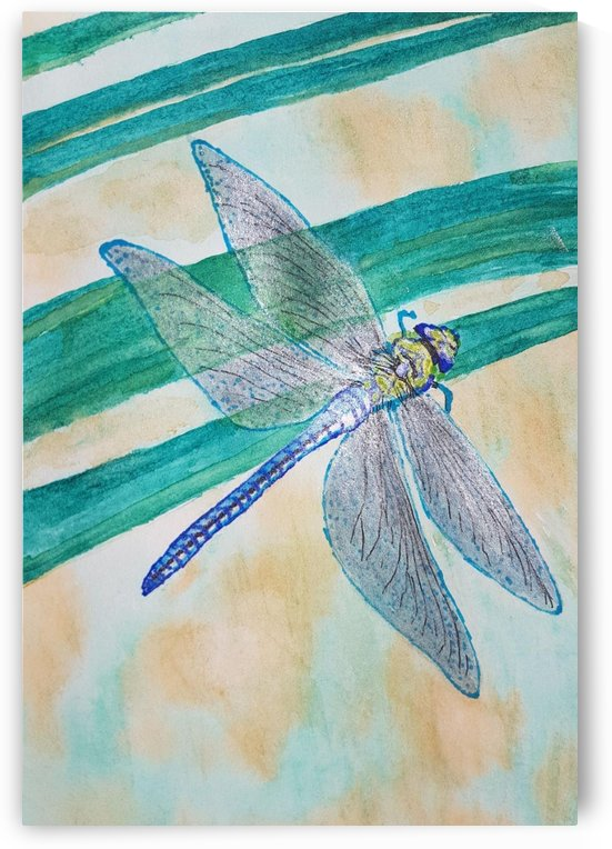 dragon fly by Shankar Kashyap