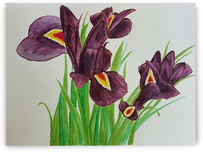 Irises by Shankar Kashyap