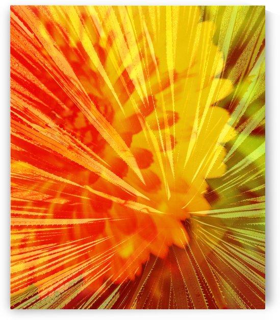 Sunrise Burst by Grammydudley