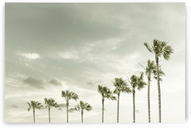 Vintage Palm Trees at the beach  by Melanie Viola
