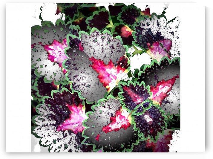 Ornamental Coleus by BotanicalArt ca