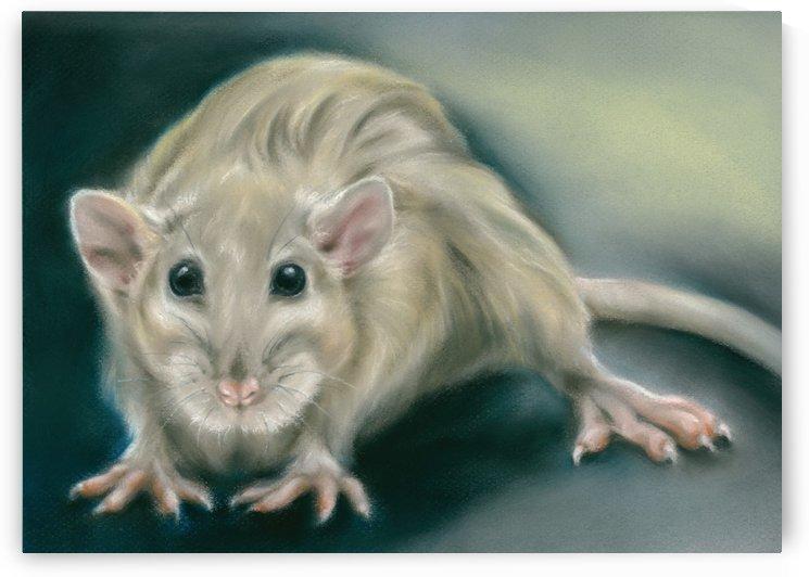 Rat Portrait Nocturne by MM Anderson
