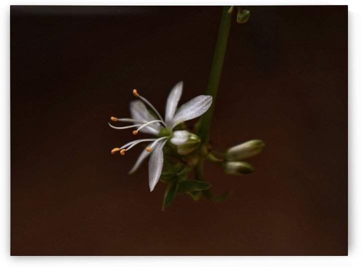 Little beauty by Christiana Hepi