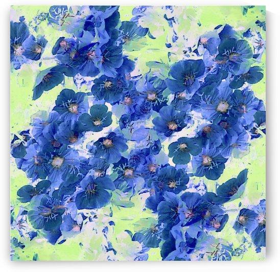 Blue Prim Roses by CvetiArt
