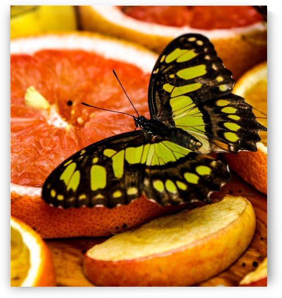 Butterfly And Oranges by Michael Stephen Dikovitsky