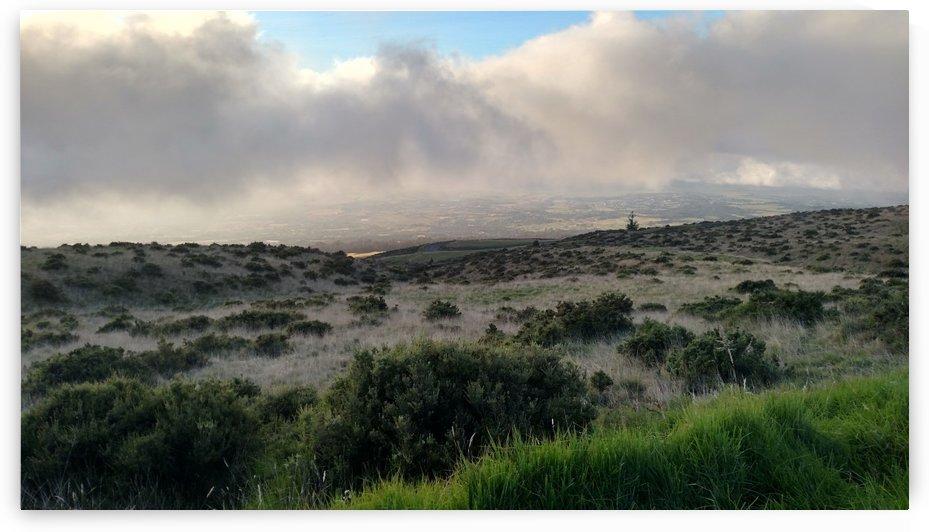 Hawaiian Grasslands by Zzyzx
