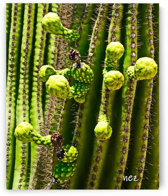 Saguaro Bloom  by Efrain Montanez